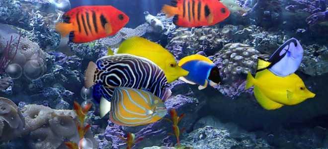 Популярные морские аквариумные рыбки