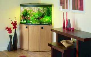 Угловой аквариум:оформление, тумба и уход за ним