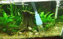 Как и чем продезинфицировать аквариум?