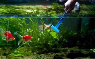 Как правильно чистить аквариум