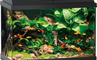 Запускаем аквариум на 60 литров