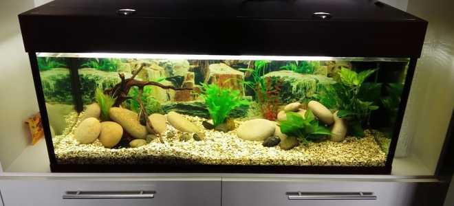 Содержание аквариума на 150 литров