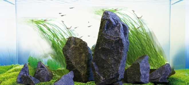 Как обработать и сколько кипятить камни для аквариума