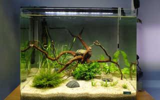 Как правильно оборудовать аквариум для рыбок?