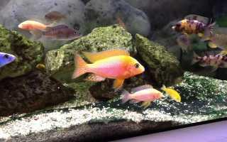 Сколько живут аквариумные рыбки и как продлить им жизнь?