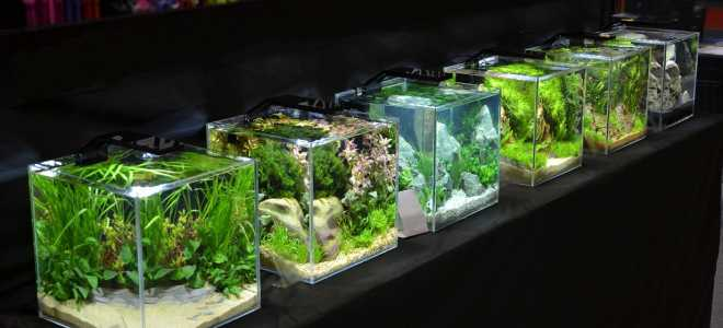 Запуск нано аквариума в домашних условиях