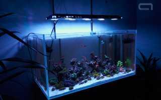 Как правильно выбрать лампу для аквариума