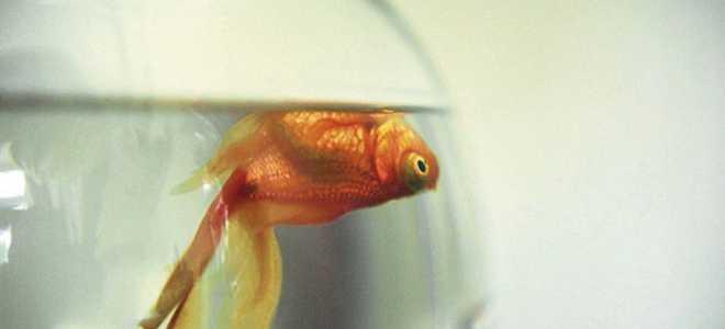 Причины смерти рыбок в аквариуме