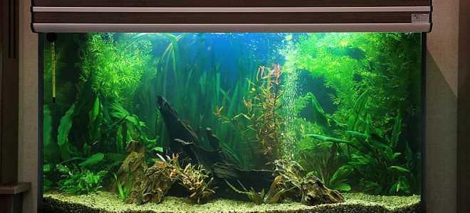Красивое оформление аквариума