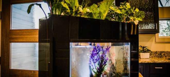 Создание фитофильтра для аквариума