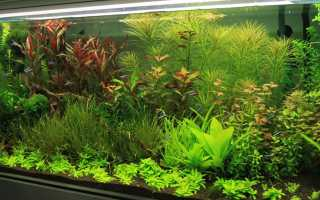 ТОП 10 самых неприхотливых аквариумных растений