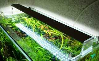 Как подобрать светильник для аквариума