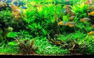 Как сделать аквариум травник