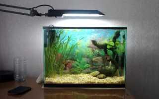 Как обустроить и кого заселить в аквариум 50 литров