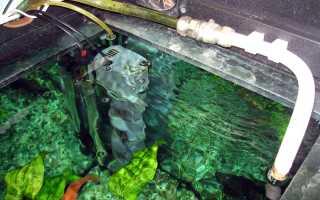 Почему воняет вода в аквариуме и от чего появляется запах?