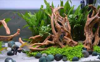 Как выбрать коряги для аквариума